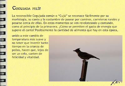 Cuaderno de campo- Cogujada