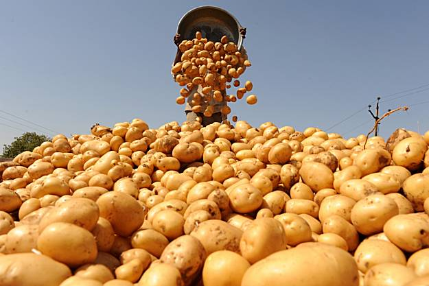 В Карелии изобрели раствор для повышения урожайности картофеля