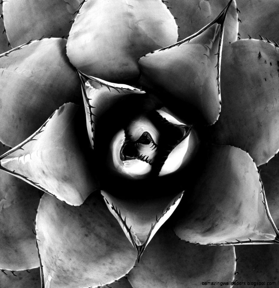 Nature Photography Black White Photography Inside Olivia Photo  I