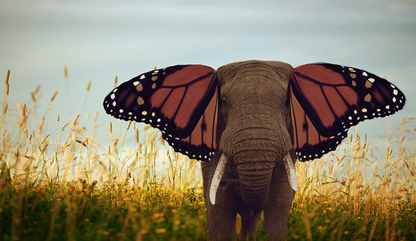 painted elephant butterfly -#main