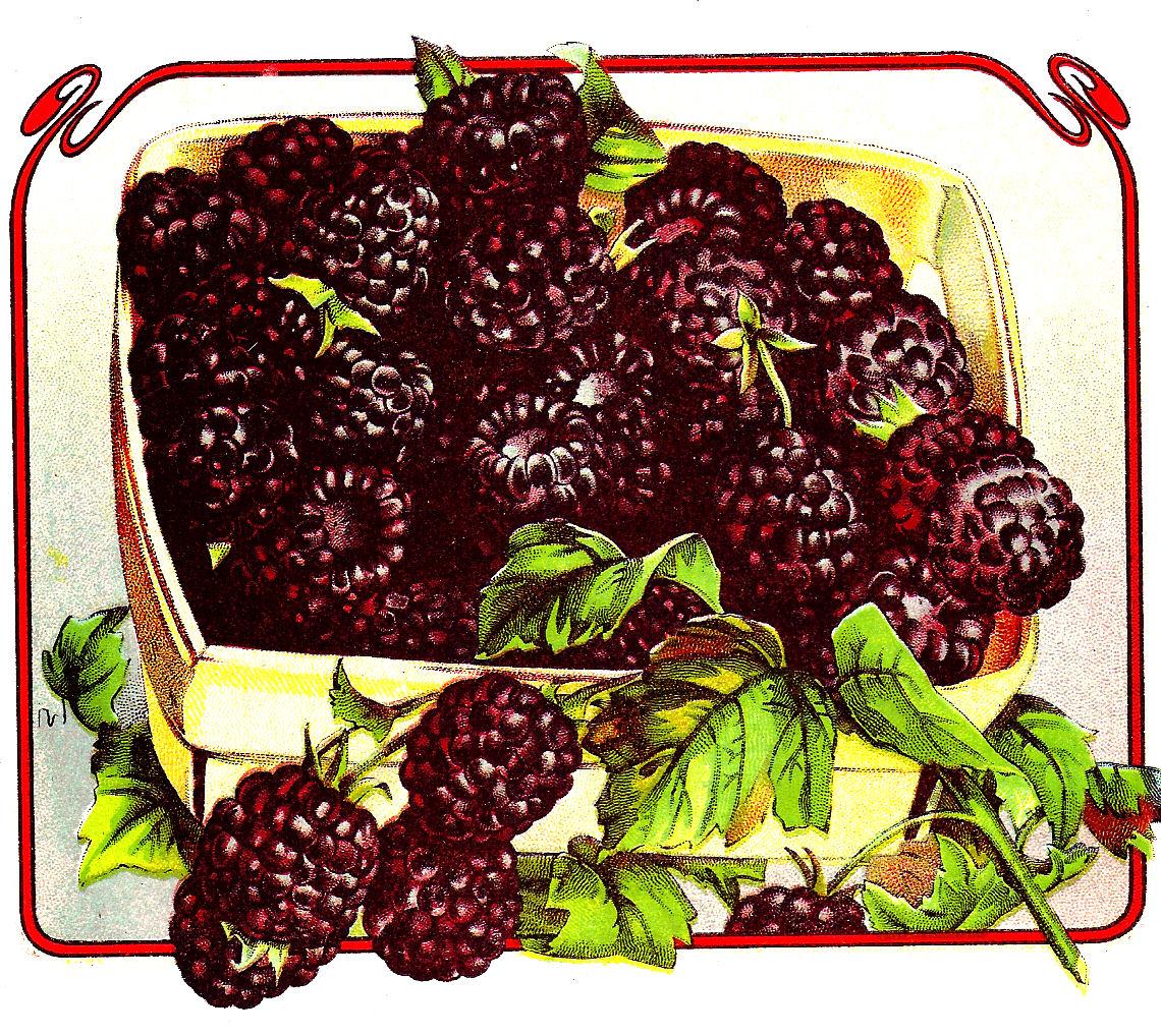 blackberry fruit clipart - photo #20