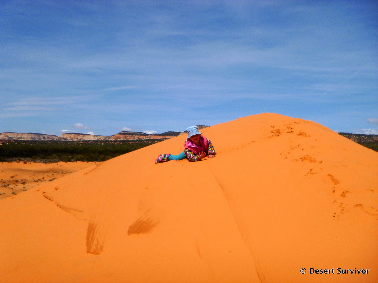 Desert Survivor Fifteen Things To Do At Coral Pink Sand Dunes State Park