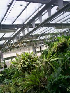 invernadero jardín botánico de Madrid