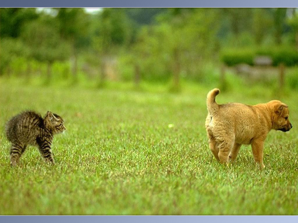 free wallpapers blog funny animal