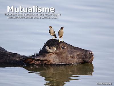 Hubungan mutualisme
