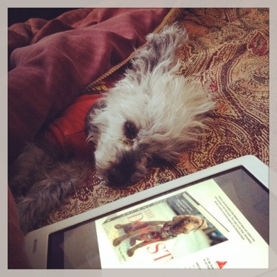 A fuzzy grey poodle, Murchie, sprawls on a red tapestry comforter with his front paws stretched before him and one ear flipped back. He wears an orange t-shirt with brown trim. In front of him is a white Kobo with The Dogist's cover on its screen.