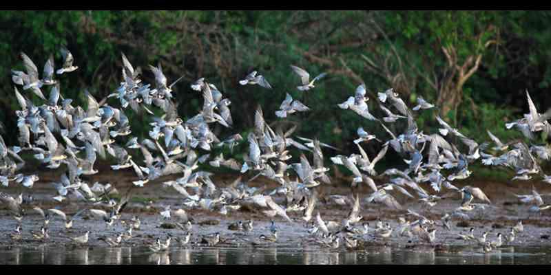 10 Tempat Wisata Paling Top di Sri Lanka - Kumana Taman Nasional