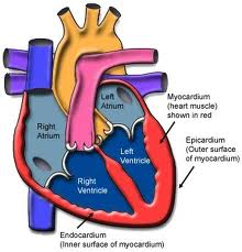 the definition of myocarditis