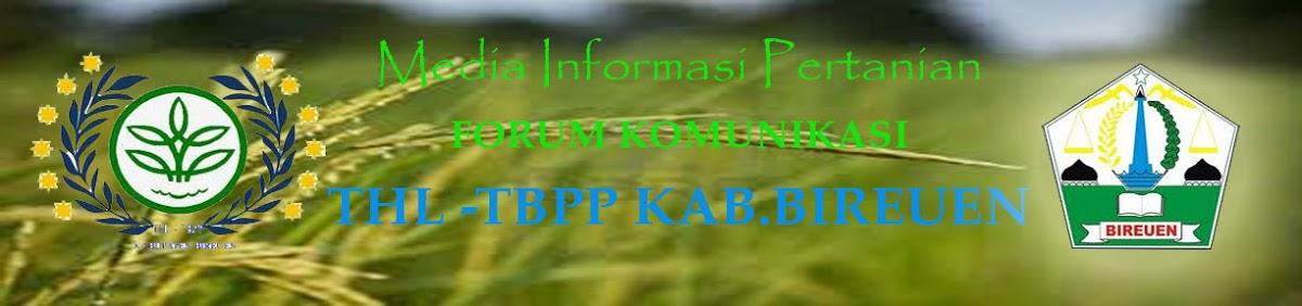 THL TBPP BIREUEN