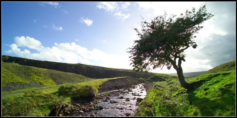 Tree Psalm 1 by water Power of Habit