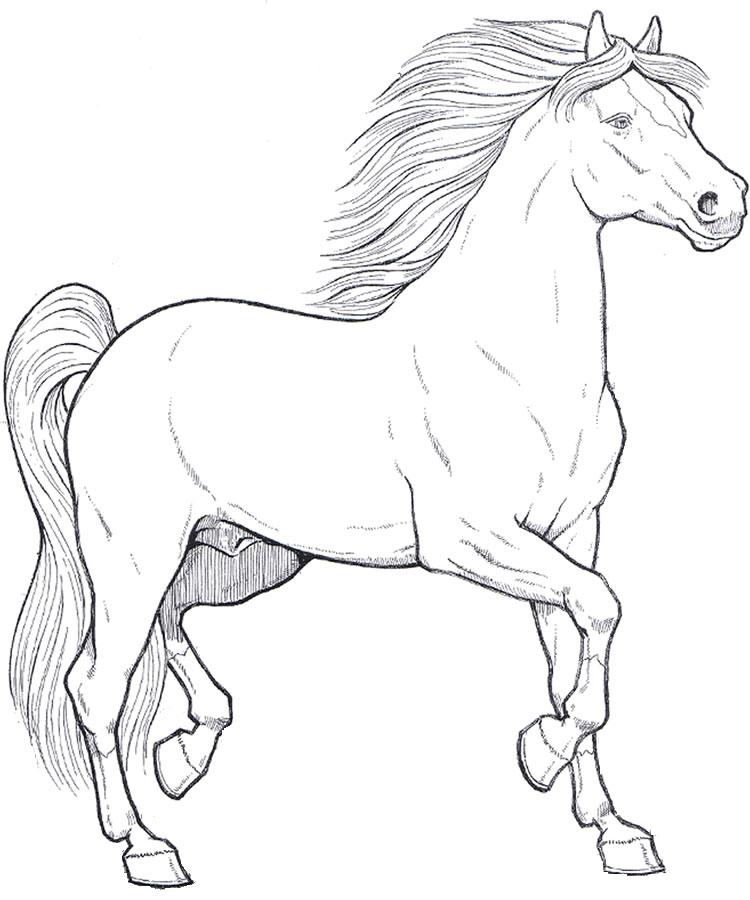 Stampa e colora cavallo for Cavalli da colorare per bambini