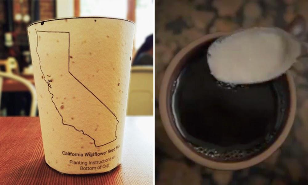 Americanos criam copo descartável que se transforma em árvore