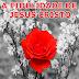 """EBD 1º Trimestre de 2015: Lição 02 (11/01/2015) - """" A fidelidade de Jesus Cristo"""""""