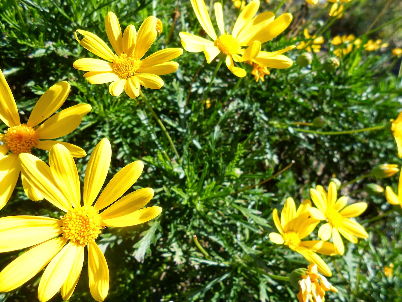 powerful relationships, blooming relationships, spiritual awakening, yellow flower photo