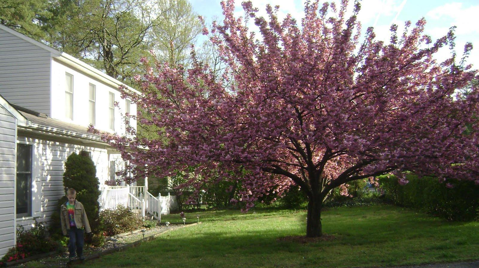 http://3.bp.blogspot.com/-BW-DLUsx3O8/T2d7V5gCVsI/AAAAAAAAEQI/DoWHfHw1uzo/s1600/spring.JPG