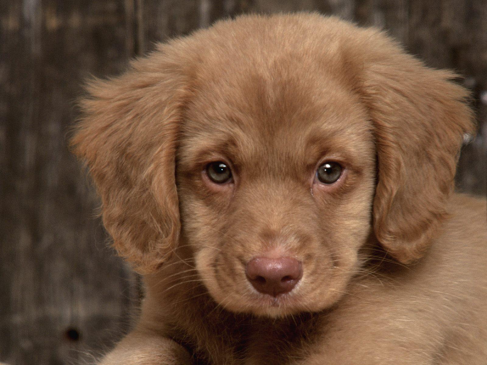 http://3.bp.blogspot.com/-BWInG9RzLk4/T_0cCwKq8fI/AAAAAAAABc0/yEXaZ_YA_Uk/s1600/Top+5+Dog+Pets+HD+Wallpapers+(4).jpg