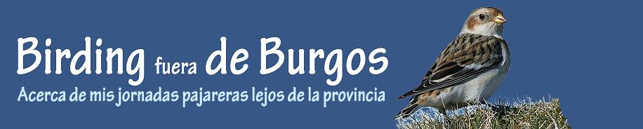 Birding fuera de Burgos