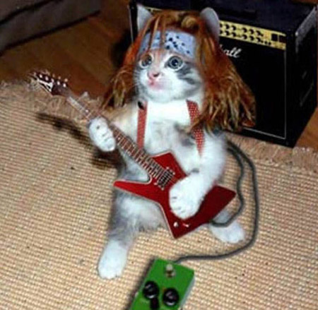 rockeando posted by roolo etiquetas animales disfraces fotos gatos ...
