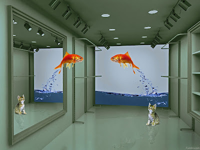 Fish jumping funny wallpapers