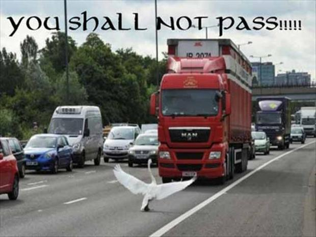 animal pictures with captions, you shall not pass