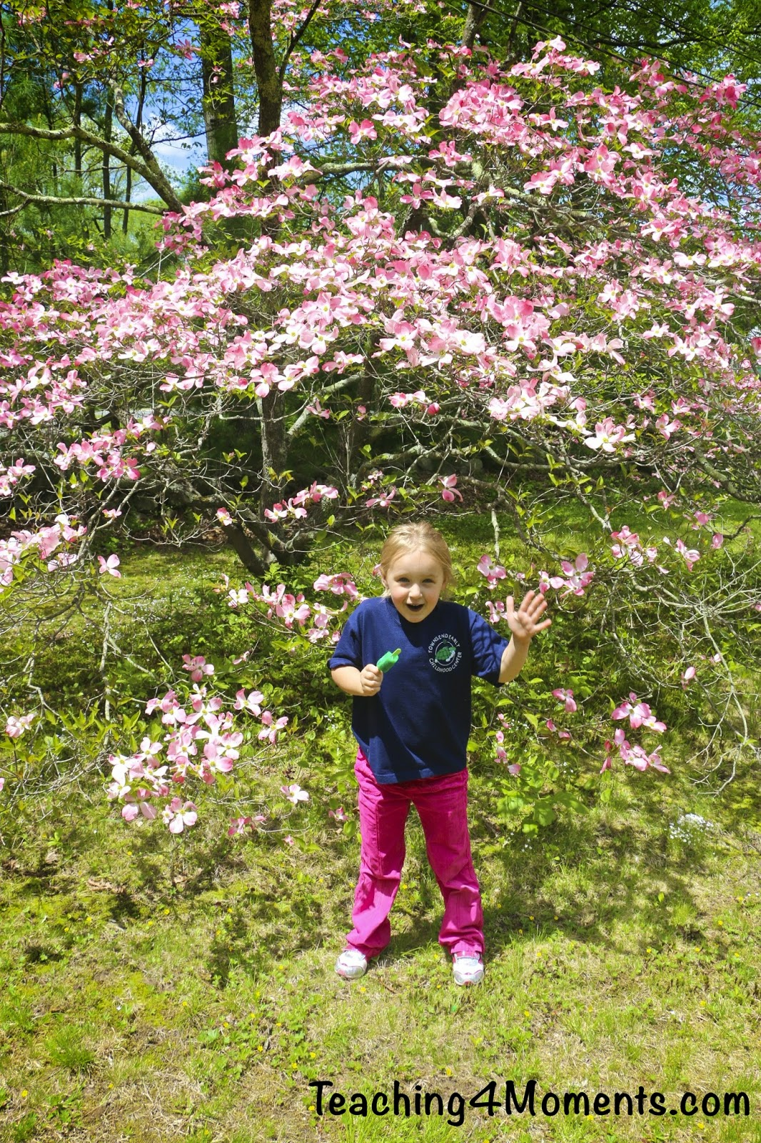 Teaching 4 Moments-Pink Flowering Dogwood with Chloe