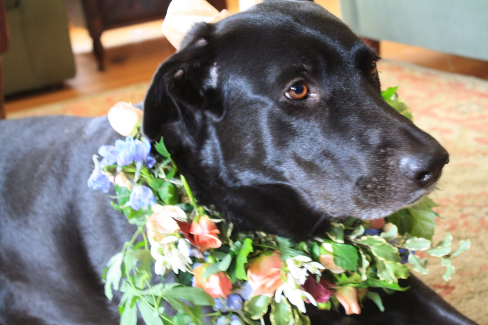 dog floral wreath collar - wreath of delphinium, spray roses, snow bell, and passion vine