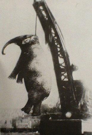 george orwell shooting the elephant essay