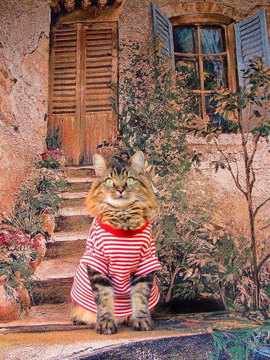 Joann Biondi - Italy - Cat