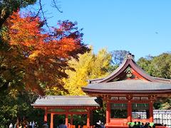 鶴岡八幡宮の紅葉