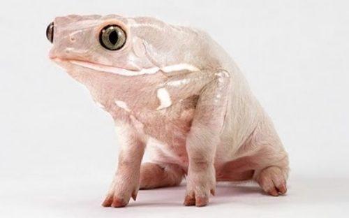 Koleksi Mengagumkan Binatang Hasil Photoshop