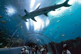 akuarium terbesar di dunia5