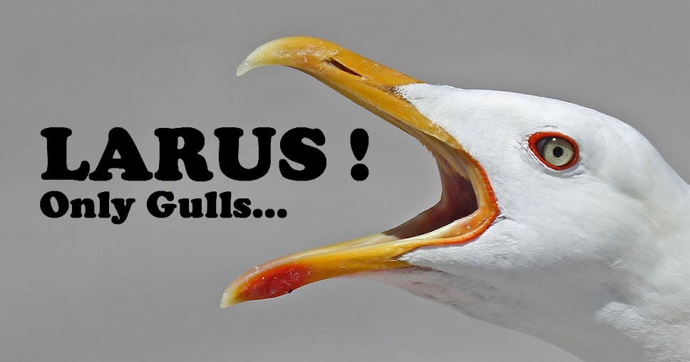 LARUS