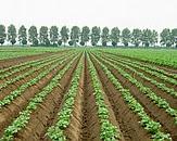 Foto cover Waterkwaliteit agrarische gebieden 2013