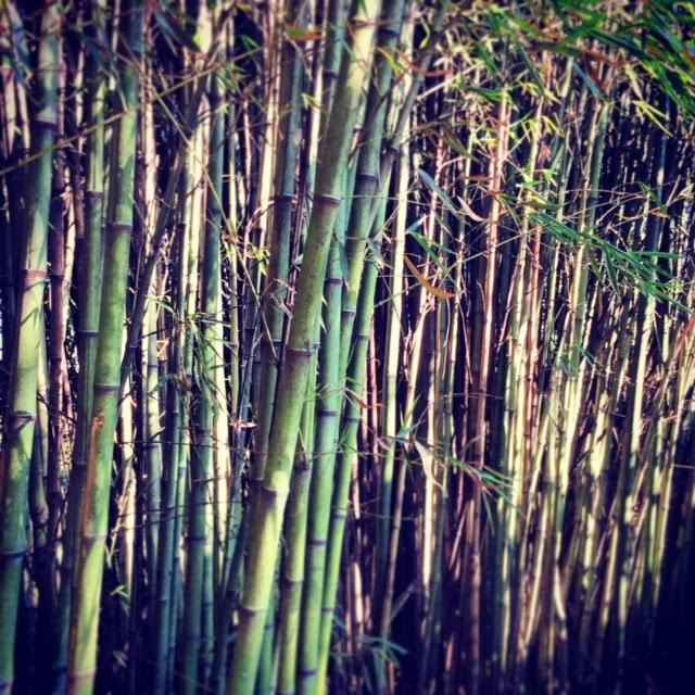 Tienda de sillones vendemos jarrones decorados con bamb - Sillones de bambu ...