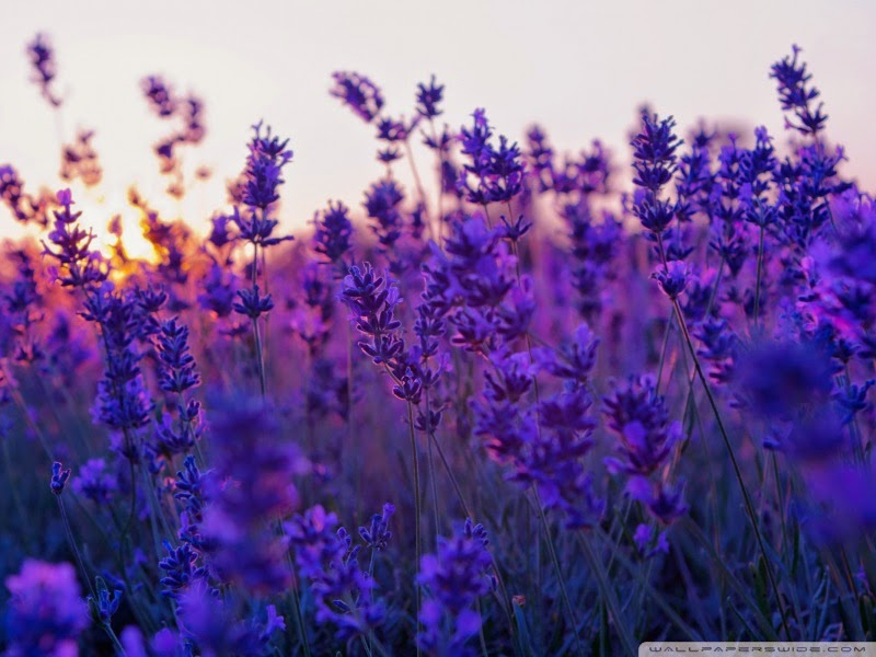 purple flowers nature 25 Best Wallpapers For HTC Nexus 9
