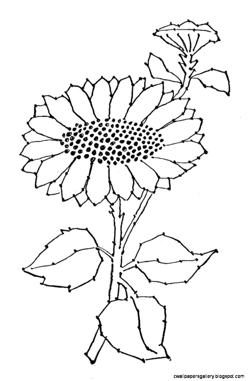 Embroidery Pattern   Sunflower Line Art   The Graphics Fairy