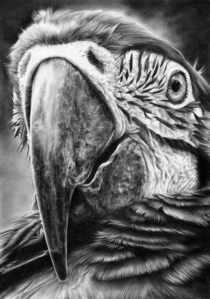 05-Parrot-2-Hyper-Realistic-Wildlife-Peter-Williams-www-designstack-co
