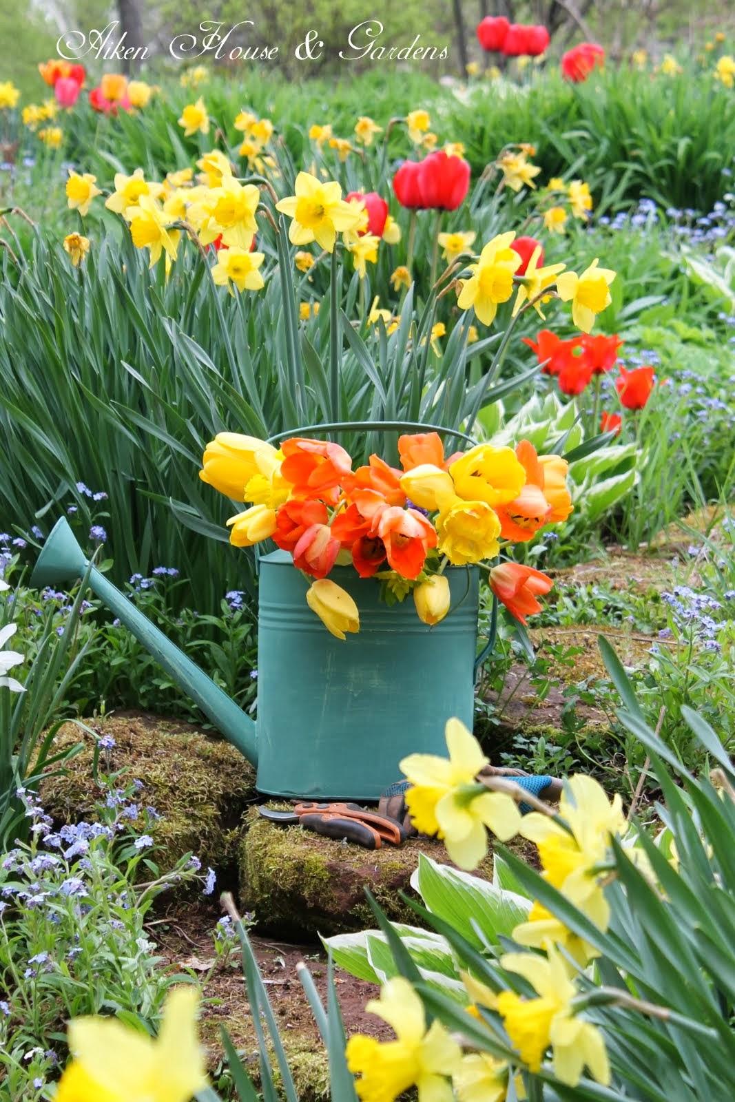 aiken house u0026 gardens dreaming of our spring garden