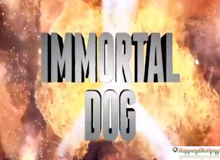 You Want Your Dog To Be Immortal ?