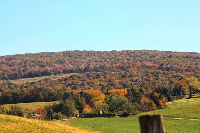 Autumn coloured trees spreading across the hill