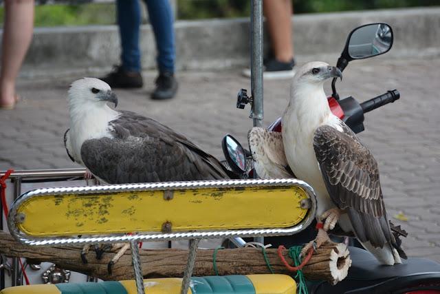 Karon View Point eagles