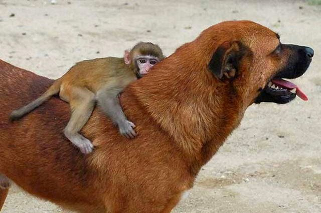 Funny animals of the week - 31 October 2014 (40 pics), cute animal pictures, animal photos