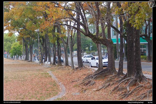 2015-03-27南投中興新村落葉美景-大葉桃花心木