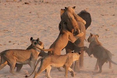 Kompetisi dalam Ekologi Hewan