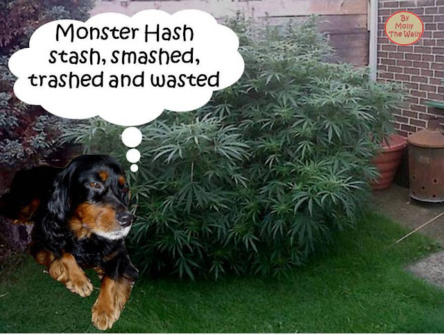 That is one big weed say Molly The Wally!