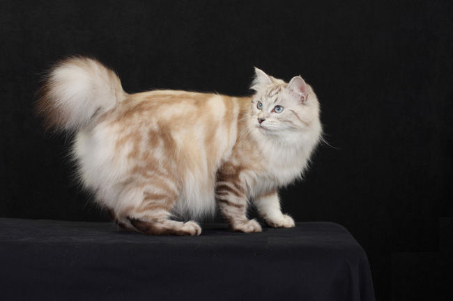 worlds best cat litter lavender