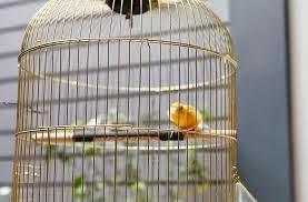 Jemur Di Pagi Hari - Jenis Burung Kolibri Ninja