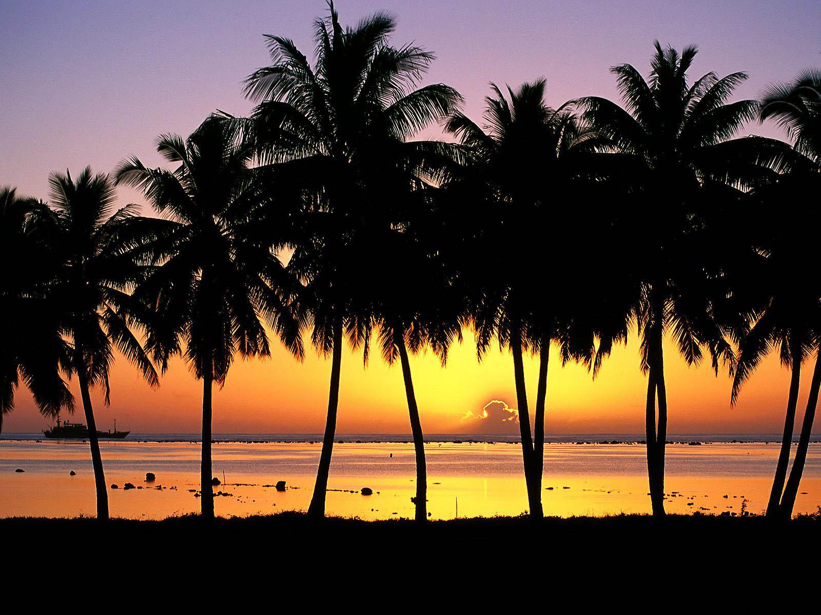 tropical sunset palm tree - photo #2
