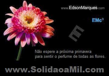 SOLIDÃO A MIL - Novo Livro - 3ª. Edição - 400 pág.