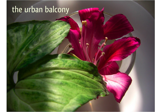 the urban balcony